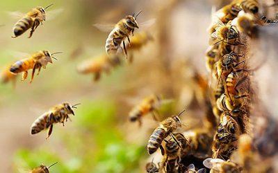 12 Manfaat madu hutan untuk kesehatan